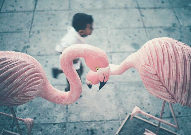 Feel with Flamingo